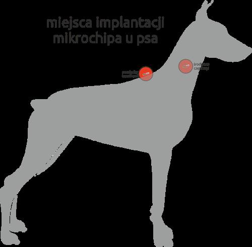 pies-z-mikroczipem